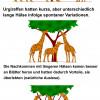 DARWINS Theorie über die Evolution der Giraffen
