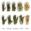 Hände und Füße von Menschenaffen und dem Menschen