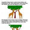 LAMARCKS Theorie über die Evolution der Giraffen