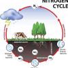 Stickstoff-Zyklus
