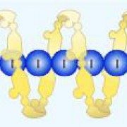 Stärke bildet mit Iod den charakteristischen, blauschwarzen Iod-Stärke-Komplex.