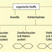 Organische Stoffe in der Pflanzenzelle