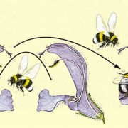Insektenbestäubung