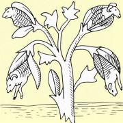 Mittelalterliche Darstellung des Schafbaumes
