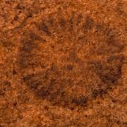 Dickinsonia costata, ein segmentierter vielzelliger Weichkörperorganismus unsicherer Zuordnung aus dem oberen Proterozoikum (Erdfrühzeit), Fundort: bei Flinders Ranges, Südaustralien, Länge: 2 cm© Institut für angewandte Geowissenschaften der Technischen Universität Berlin(Fotograf: Wolf Schuchardt)