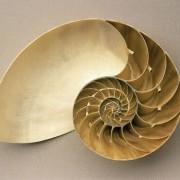 Nautilus, rezent aus Indonesien, Länge: 13,5 cm © Institut für angewandte Geowissenschaften der Technischen Universität Berlin (Fotograf: Wolf Schuchardt)