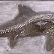 Fischsaurier aus dem Jura (Stenopterygius quadriscissus), Fundplatte aus Holzmaden