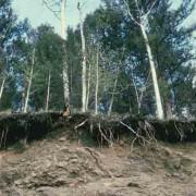 Die Wurzel verankert die Pflanze im Boden.