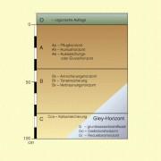 Die Bodenhorizonte A, B und C werden durch zusätzliche Kleinbuchstaben genauer gekennzeichnet.Für Gleyböden, die vom Grundwasser beeinflusst sind, gibt es gesonderte Bezeichnungen.