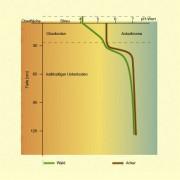Der ph-Wert des Bodens ist sowohl unter Wald als auch unter Acker von der Tiefe abhängig.Waldböden sind jedoch an der Oberfläche sauer.