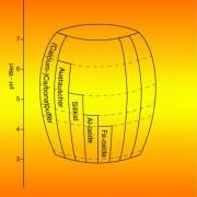 Der Boden enthält mehrere Puffer gegenüber Wasserstoff-Ionen.Sobald ein Puffer erschöpft ist, sinkt der ph-Wert bis zum nächsten Puffer ab.