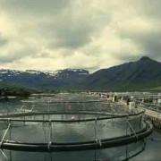 Lachszuchtfarm in Norwegen