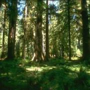 Unterschiedliche Lichtintensitäten in einem Laubmischwald