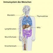 Viren Als Krankheitserreger In Biologie Schülerlexikon Lernhelfer