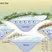 Temperaturverteilung und Sauerstoffsättigung eines Sees im Verlauf eines Jahres