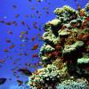 Korallenriffs sind eine der Hauptattraktionen für Touristen