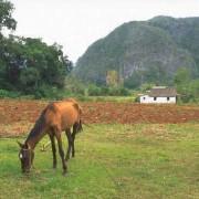 Kalksteinberge überragen das Tiefland im Westen Kubas.
