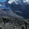 Auf der Umkreisungs-Route des Kilimandscharo unter dem Südabfall des Kibo-Gipfels mit Heim- und Kersten-Gletscher.