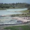 Die Momella-Seen im Arusha-Nationalpark, im alkalischen (basischen) Schlamm fischen hunderte Flamingos nach Nahrung