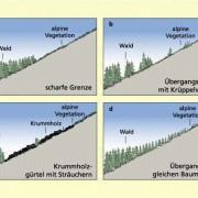 Grundtypen der klimatischen Waldgrenze