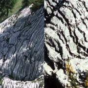 Karren an der Oberfläche von Kalkgestein.