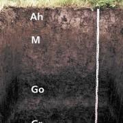 Die Braune Vega weist einen von den Flüssen abgelagerten Auenlehmhorizont M auf.