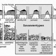 Position der Savanne in der Klimaabfolge von feucht nach trocken in den Tropen