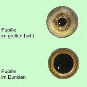 Anpassung an unterschiedliche Helligkeit von Gegenständen durch Veränderung der Größe der Pupille