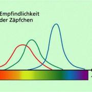 Die drei Arten von Zäpfchen sind für unterschiedliche Farben (Wellenlängen) empfindlich.