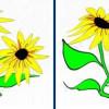 Ganzbildmanipulation: Dehnen und Verzerren von Pixelgrafiken.