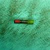 Magnetfeld um einen Stabmagneten, veranschaulicht mit Eisenfeilspänen