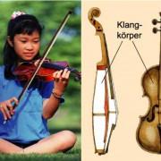 Eine Violine und ihr Aufbau
